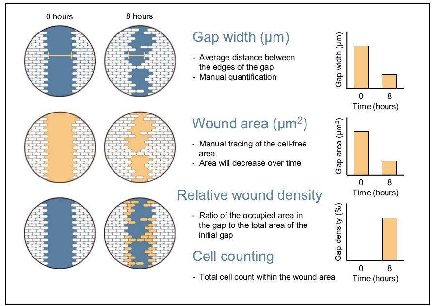 wound healing assay manual and automated methods